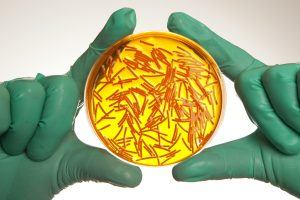 petri-dish-with-viruses
